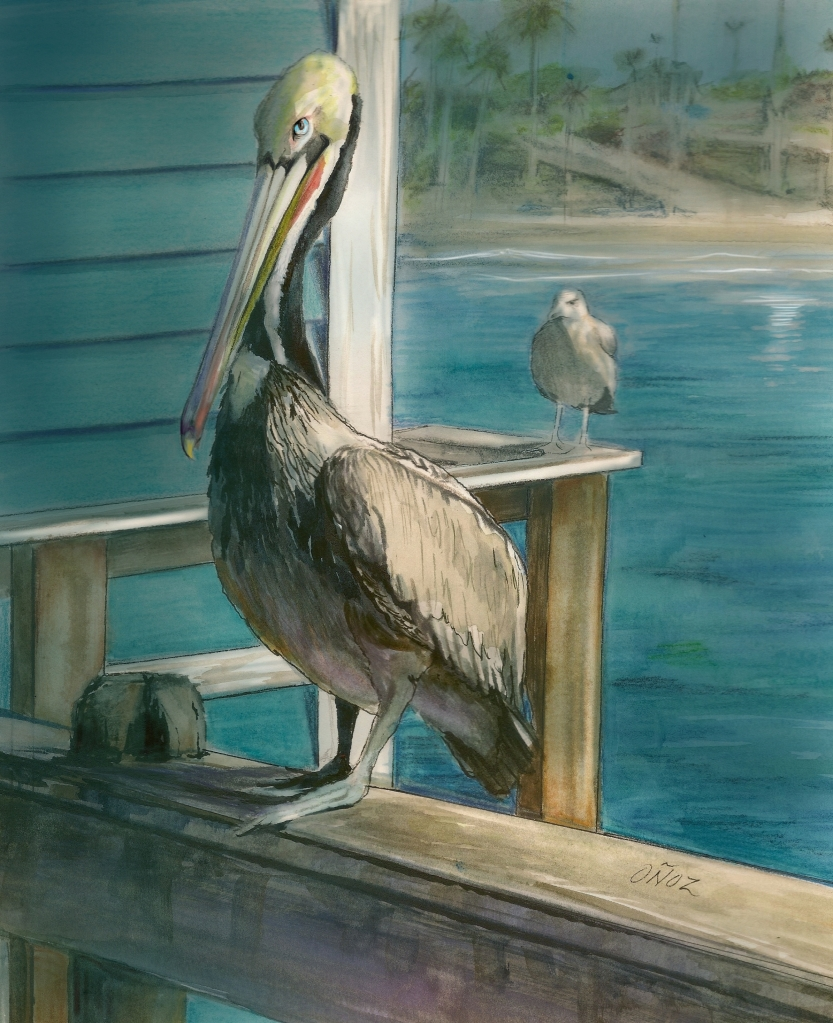 oceanside-pelican-tweeked